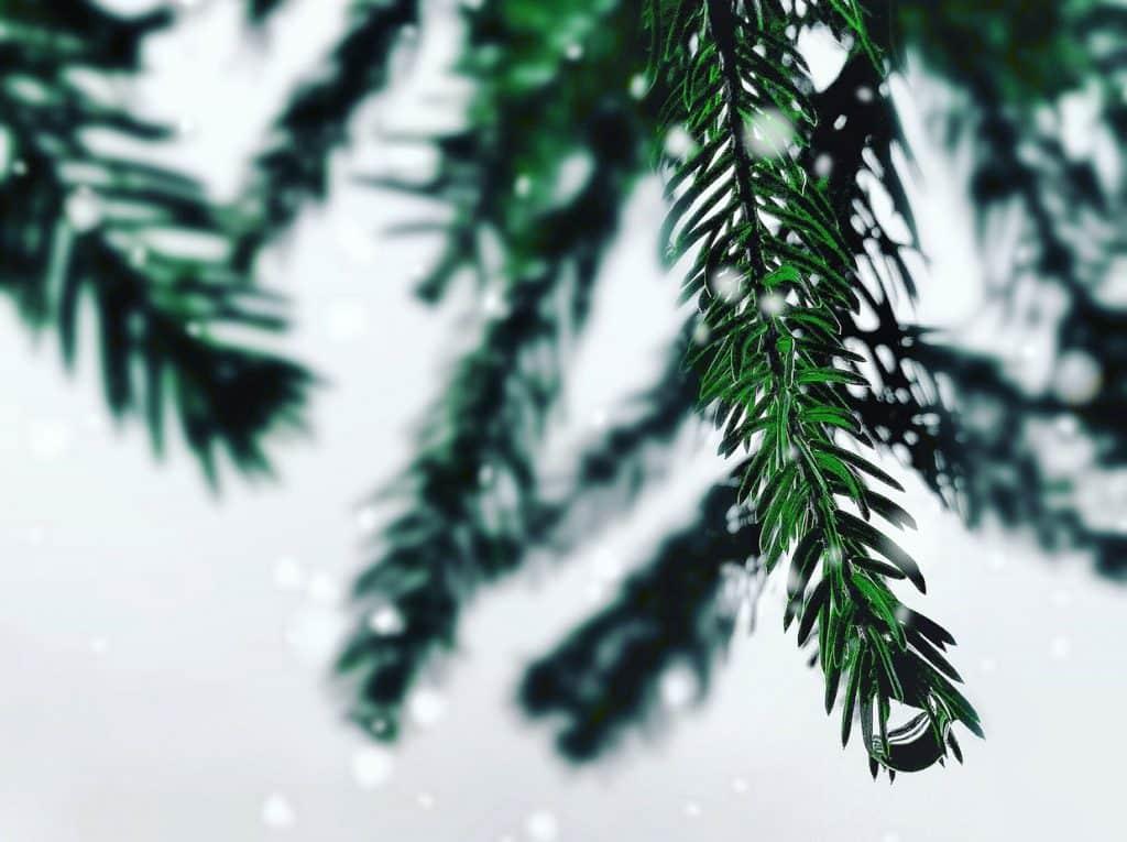 ondersteboven-kerstboom-kopen-5-varianten
